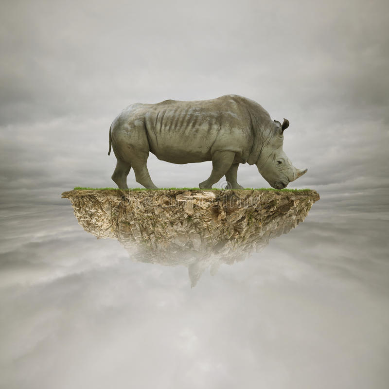 Носорог на утесе стоковое изображение