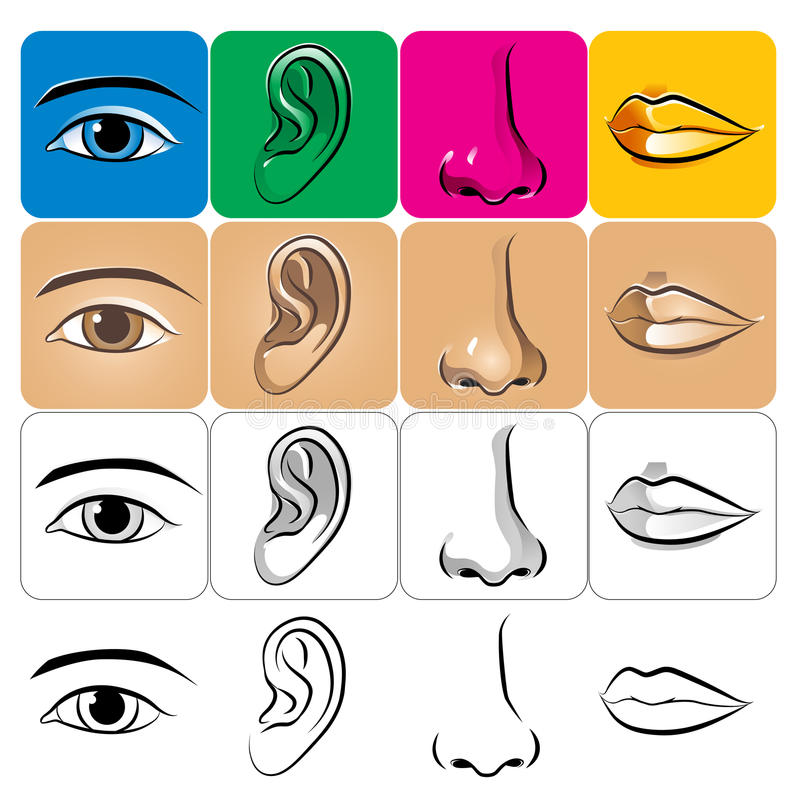 нос губы глаза уха иллюстрация вектора
