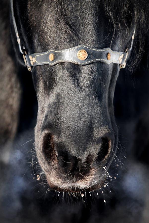 нос лошади черноты близкий вверх стоковая фотография