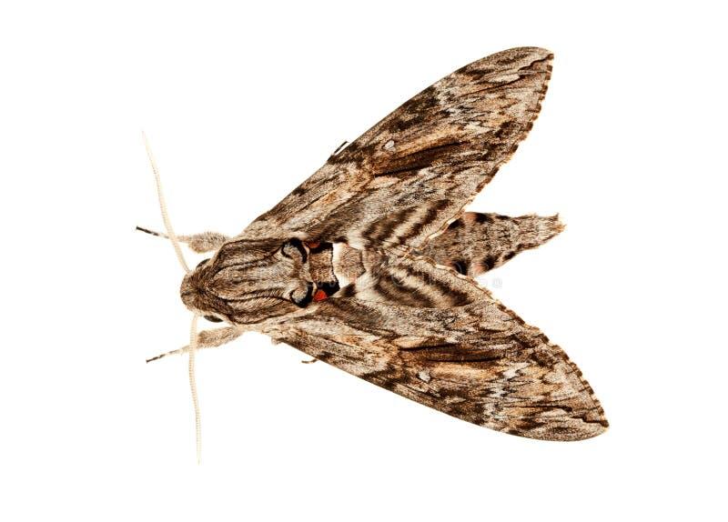 ноча бабочки стоковые изображения rf