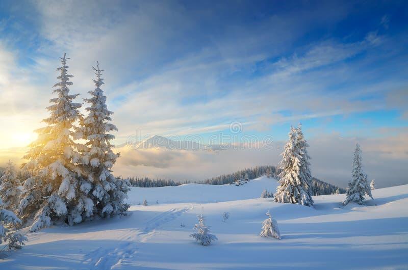ноча волшебства ландшафта рождества стоковое изображение