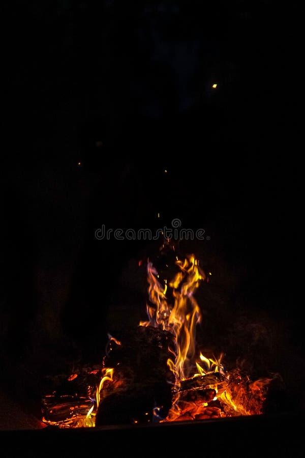 ноча испепеления лагерного костера заросли стоковое изображение rf