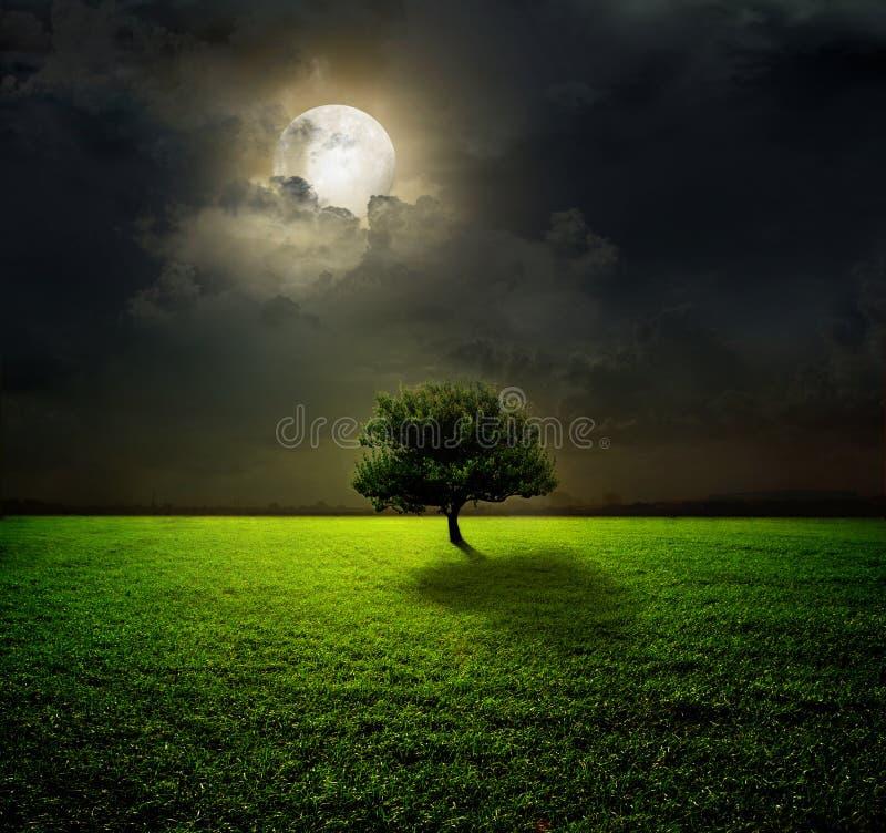 Ноча и луна стоковые фото