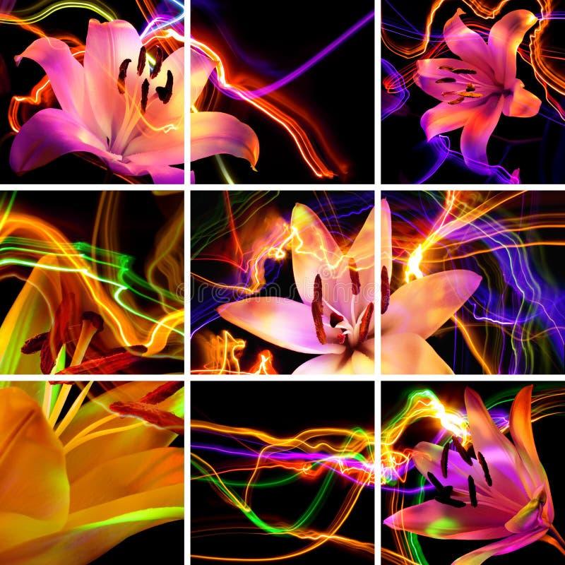ноча лилии цветка ароматности бесплатная иллюстрация