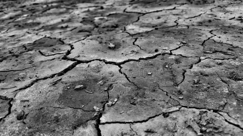 Ноча пустыни одна унылая стоковые фотографии rf