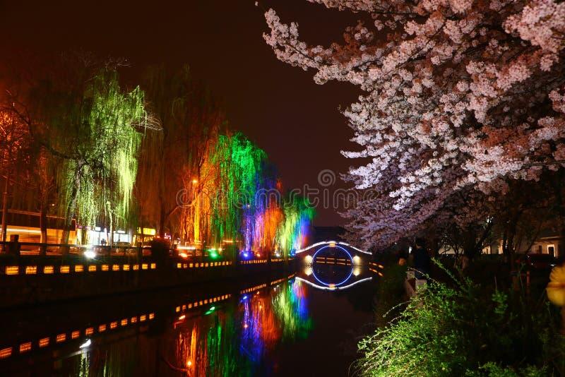 Ноча Сакура стоковое фото