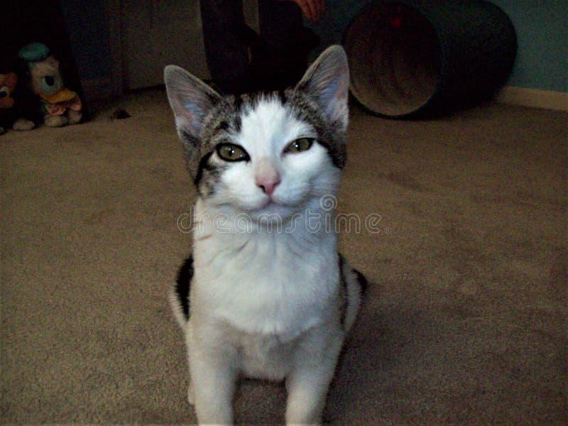 Ноча счастливого котенка первая в доме вечности стоковые изображения rf