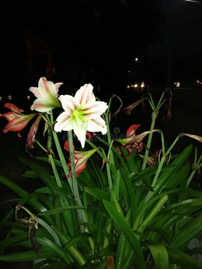 Ноча flower2 стоковое изображение rf