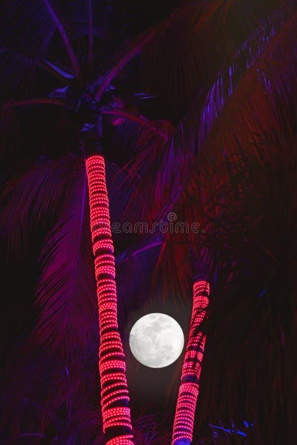 Ночи пальмы стоковое фото rf
