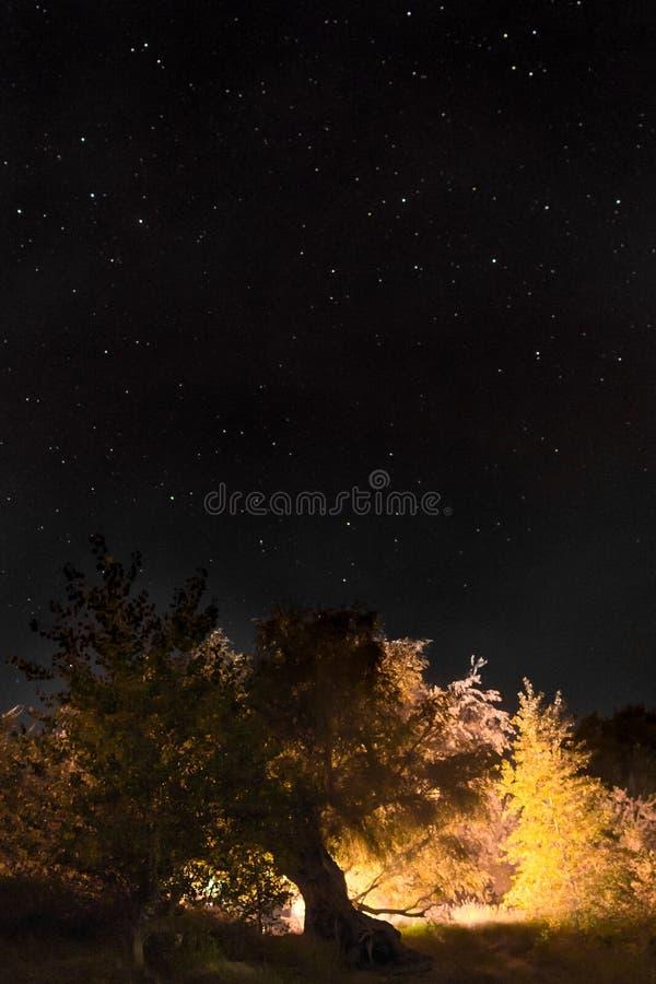 Ночное небо вертикально стоковая фотография