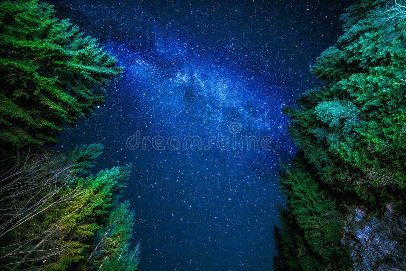 Ночное небо в лесе иллюстрация вектора