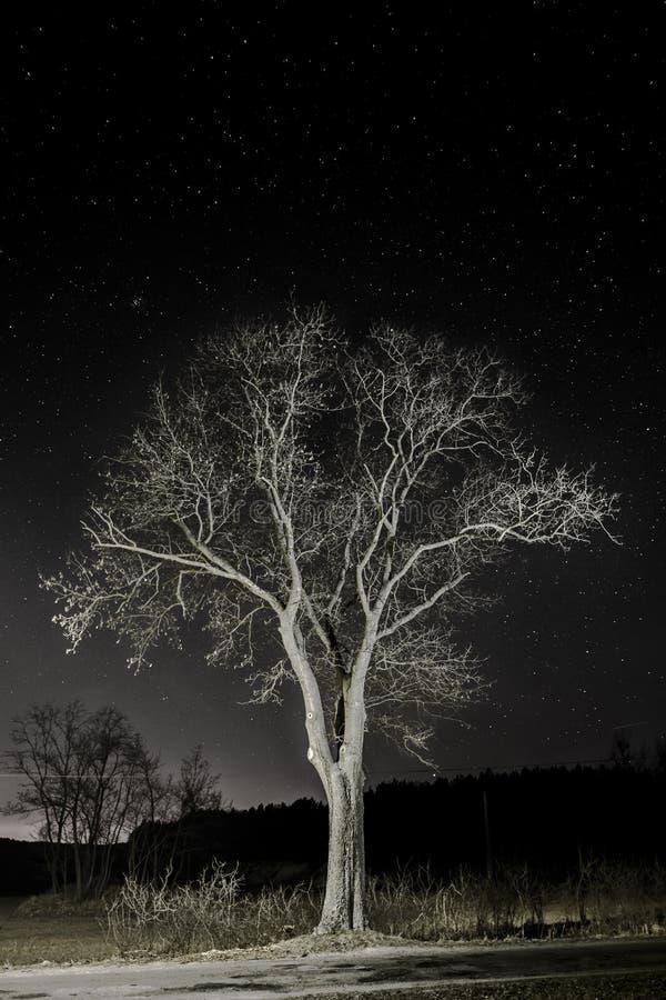 Ночное небо играет главные роли дерево стоковое изображение rf