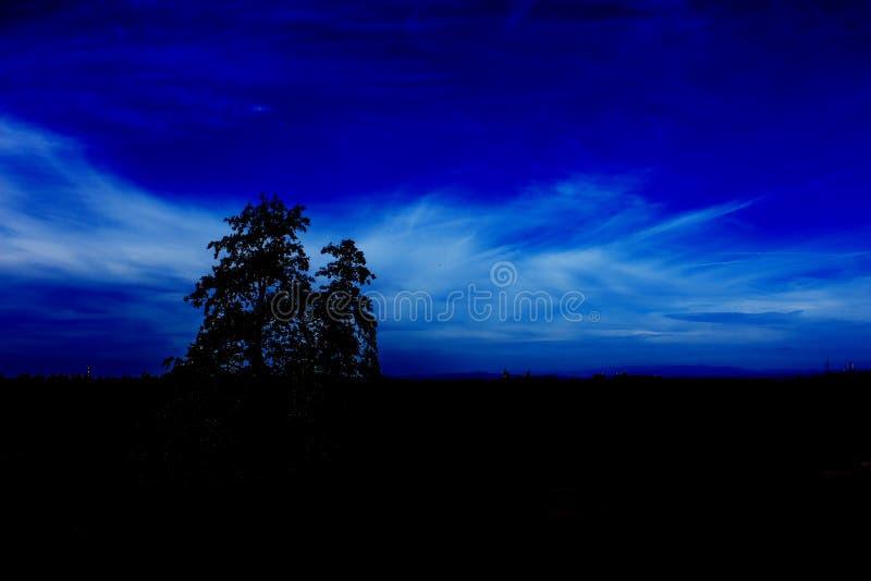 Ночное небо и дерево стоковые изображения