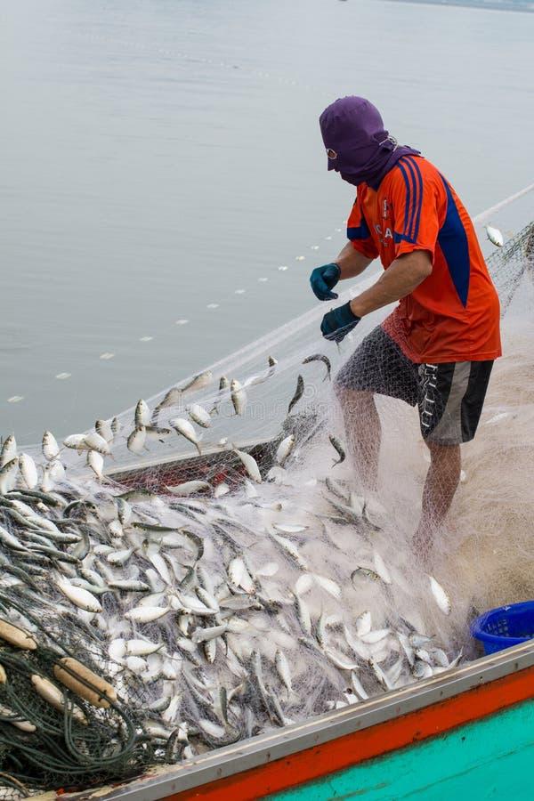 НОЯБРЬ 5,2016: На шлюпке рыболова, улавливая много рыб на рте реки Bangpakong в провинции Chachengsao к востоку от Таиланда стоковое изображение