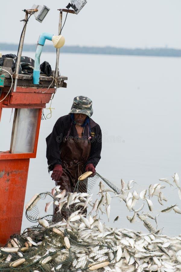 НОЯБРЬ 5,2016: На шлюпке рыболова, улавливая много рыб на рте реки Bangpakong в провинции Chachengsao к востоку от Таиланда стоковое изображение rf