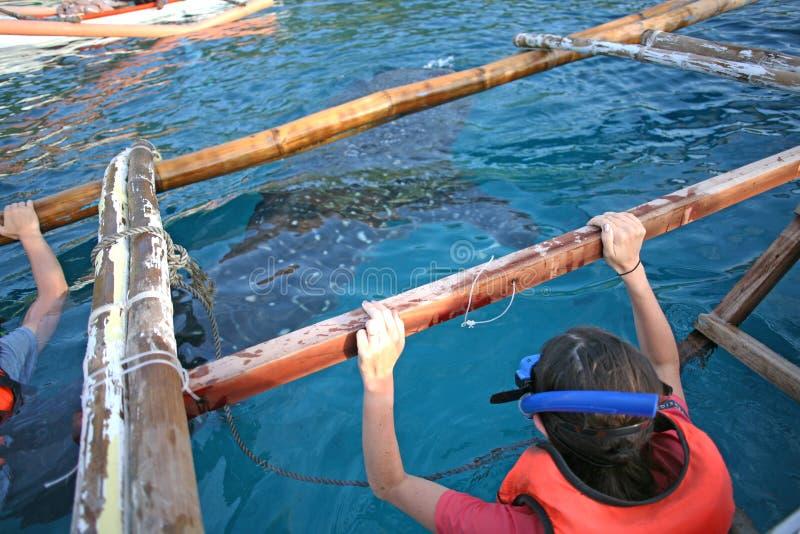 Нырять внутри во время наблюдать китовой акулы стоковые фотографии rf