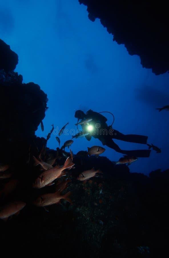 нырять под водой стоковое фото rf