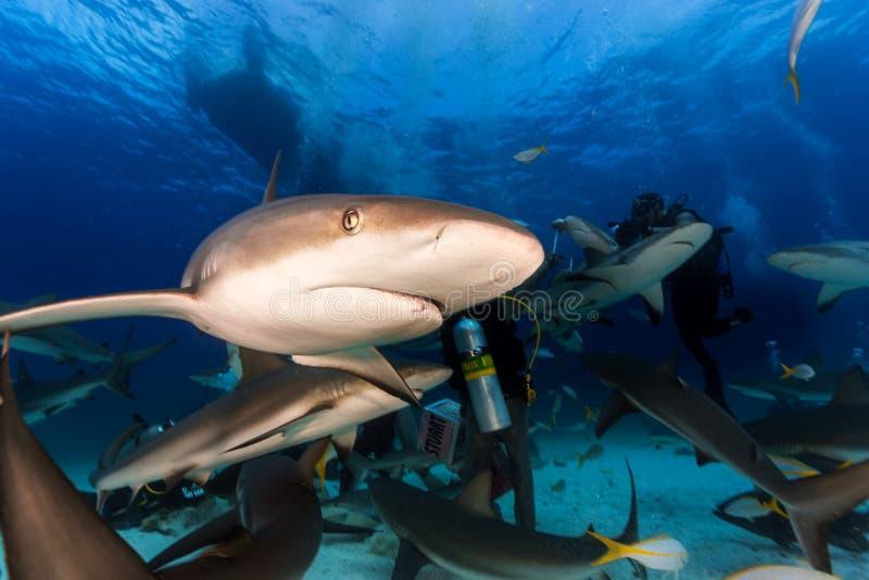 Нырять с много акул рифа совсем вокруг и подавая остервенение в Na стоковое изображение