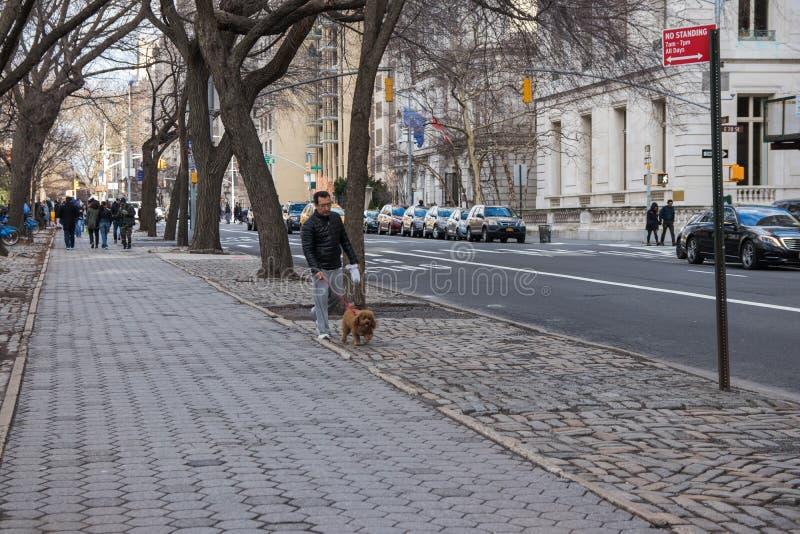 Нью-Йорк, США - 3-ье января 2019 Человек идя с собакой на улице NYC lifestyle стоковое изображение
