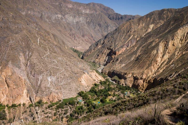 Оазис внутри каньона colca стоковые изображения rf
