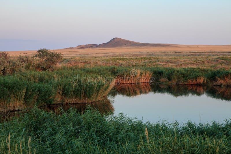 Оазис озера Тростники и ландшафт злаковиков стоковые фотографии rf