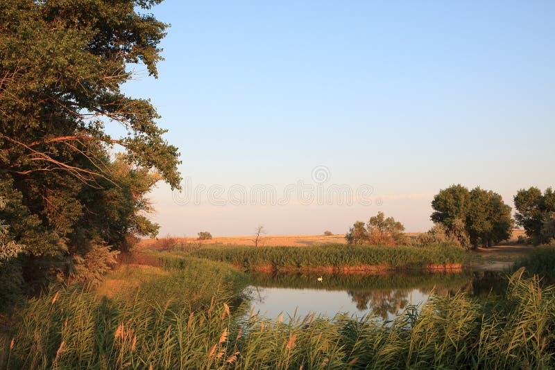 Оазис озера Тростники и ландшафт злаковиков стоковая фотография rf