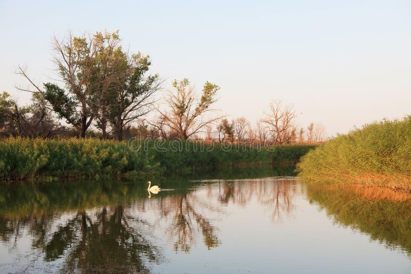 Оазис озера Тростники и ландшафт злаковиков стоковое фото rf