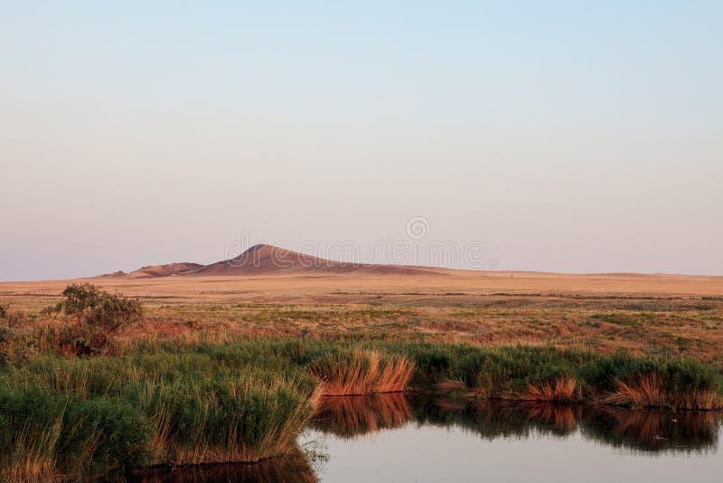 Оазис озера Тростники и ландшафт злаковиков стоковые изображения rf