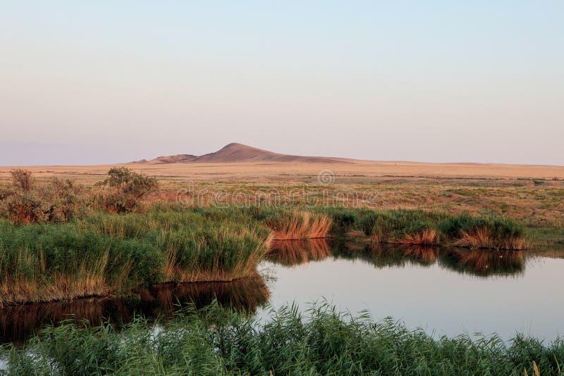 Оазис озера Тростники и ландшафт злаковиков стоковое изображение