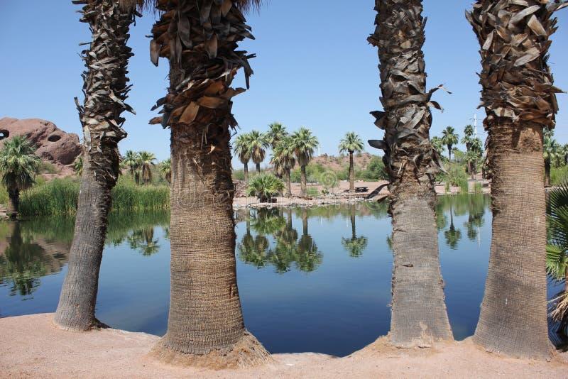 Оазис пальмы пустыни стоковая фотография