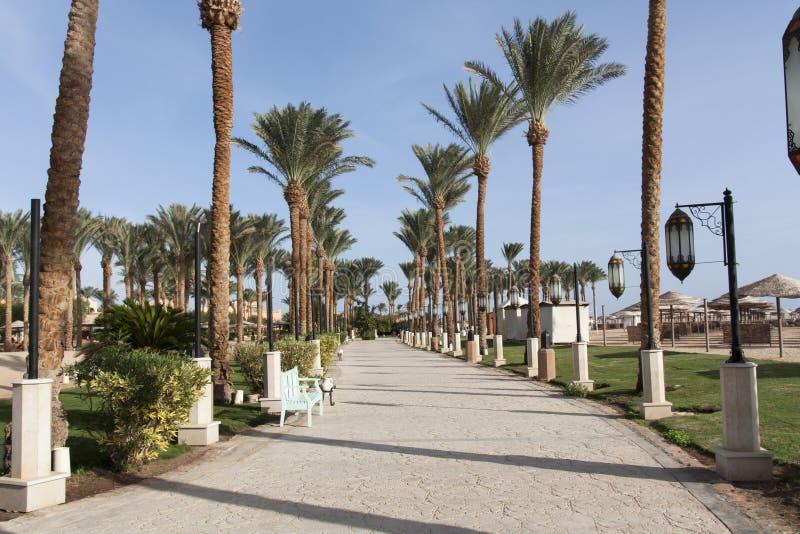 Оазис пальм и фото растительности Обваловка вдоль пляжа в Makadi, Египте стоковая фотография