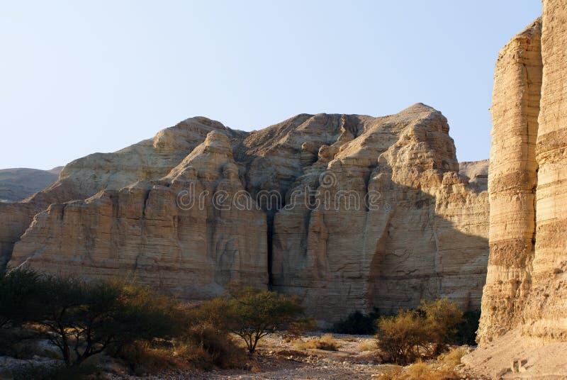 оазис пустыни стоковые фотографии rf