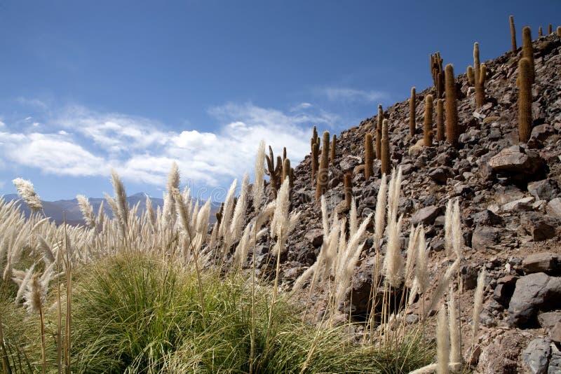 оазис пустыни atacama стоковое фото rf