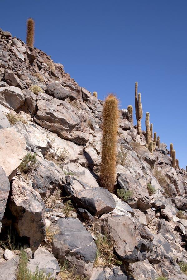 оазис пустыни atacama стоковое изображение rf