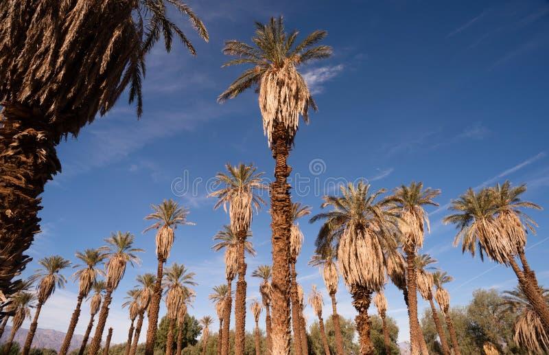 Оазис тропической заводи Death Valley печи деревьев стоковые фото