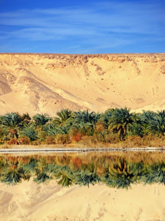 оазис farafra стоковое изображение