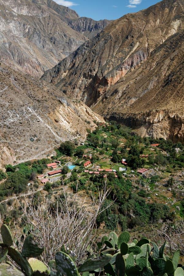 Оазис Sangalle в каньоне Colca, Перу стоковое фото