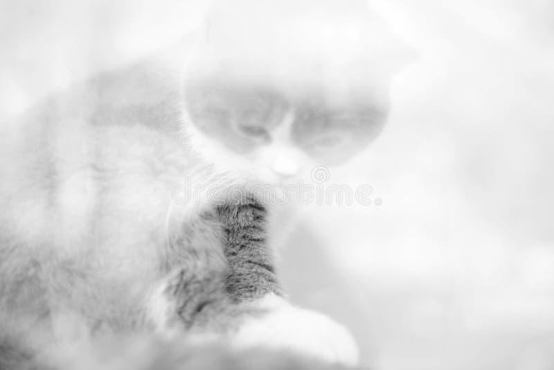 Обдумывая кот в стеклянном окне стоковая фотография rf