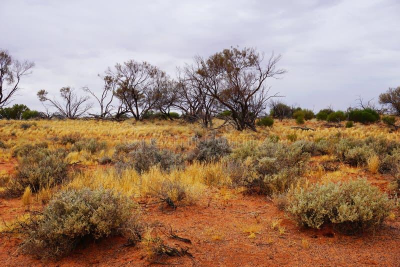 Обезвоженные земли, Roxy опускают, захолустье южная Австралия стоковая фотография rf