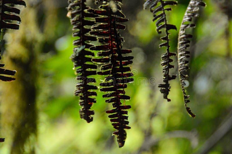 Обезвоженные листья папоротника стоковое фото