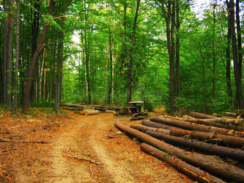 Обезлесение, валить журналы и старый бульдозер в лесе стоковые фотографии rf