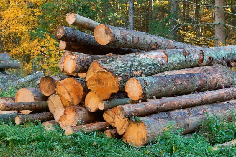 Обезлесение, обезлесение, валить стволы дерева, журналы штабелированные поверх одина другого стоковое изображение rf