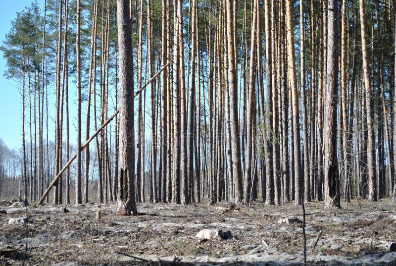 обезлесение весны санитарное стоковые изображения rf