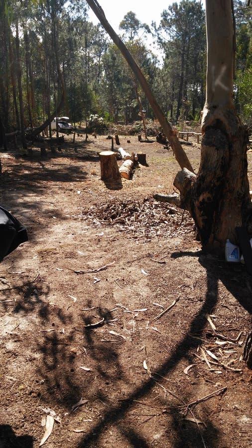 Обезлесение осени в Canelones, Уругвае стоковые фото