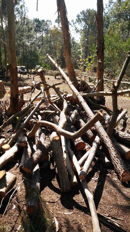 Обезлесение осени в Canelones, Уругвае стоковое изображение