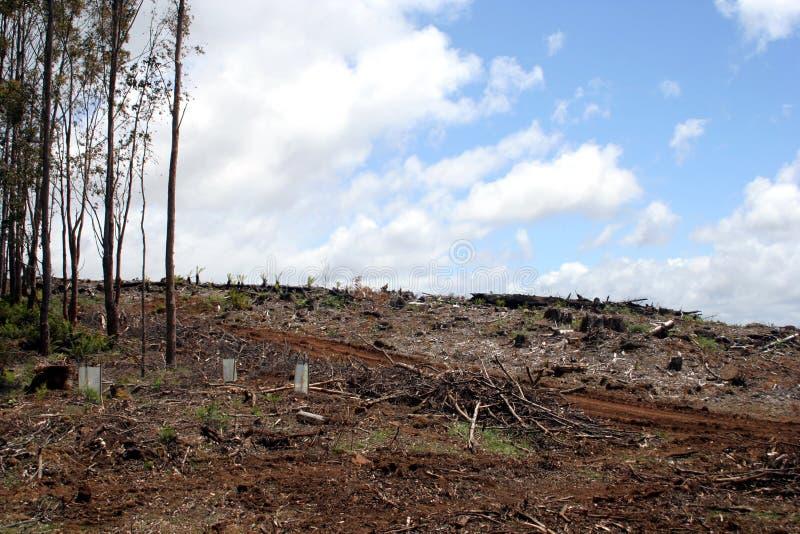 обезлесение Тасмания Австралии стоковая фотография