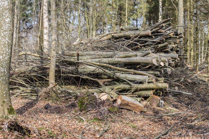 Обезлесение, убийство леса стоковая фотография