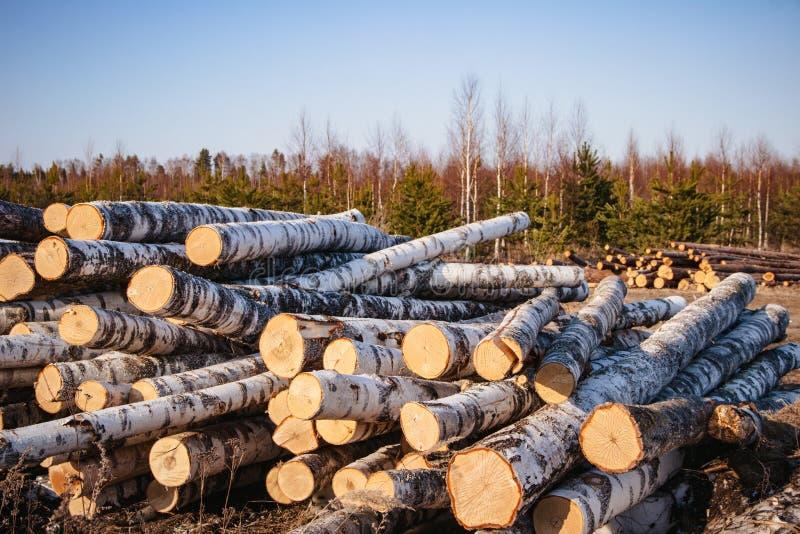 обезлесение Фото вносит дальше лес в журнал стоковое изображение