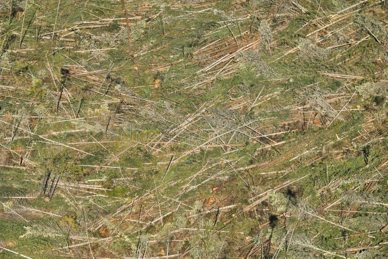 обезлесение стоковое изображение rf