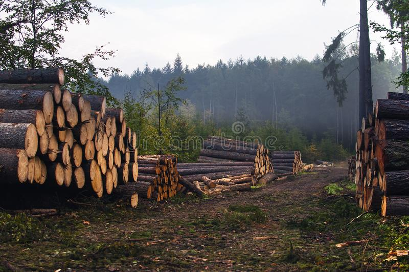 обезлесение стоковое фото